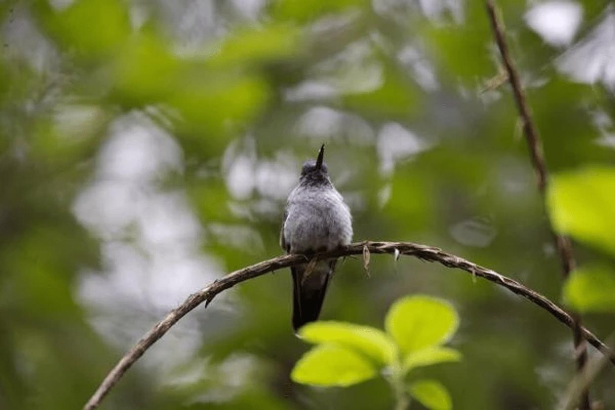 birds tours