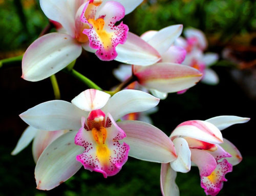 Visual Adventure: Butterfly Garden, Orchids garden & more