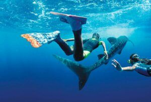 things to do in Jamaica explore the sea