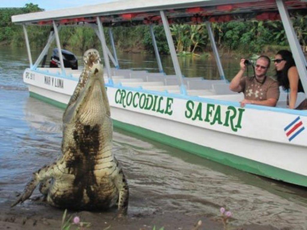 Crocodile Jungle Safari