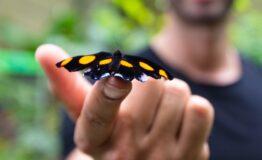 Butterfly garden Jaco Beach Costa Rica