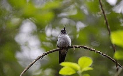 St Lucia bird watching tour