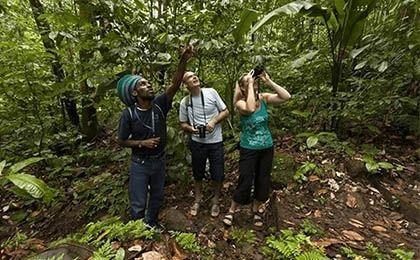 St. Lucia fern nature trail